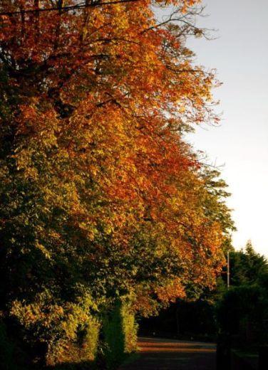 The Avenue, Glynn - Autumn 2013