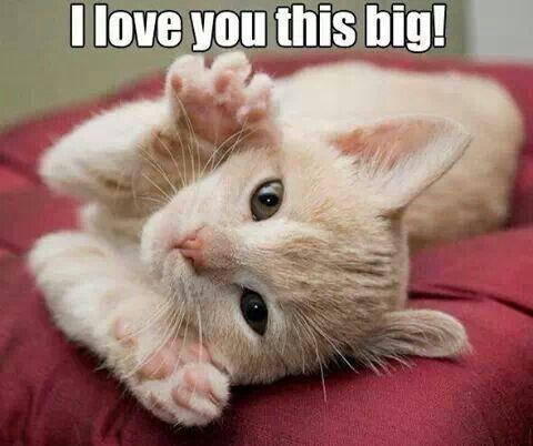I love you | cats cats cats! | Pinterest