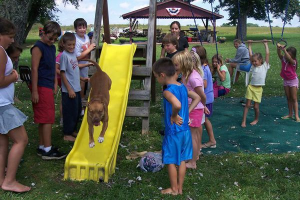 StubbyDog: Stories - why pit bulls love kids