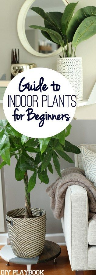 Guide to Indoor Plants. Also, love the pot that doesn't look like an ugly clay pot.