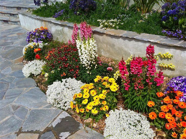 Colorful border drought tolerant plants gardening - Drought tolerant plants landscape design ...