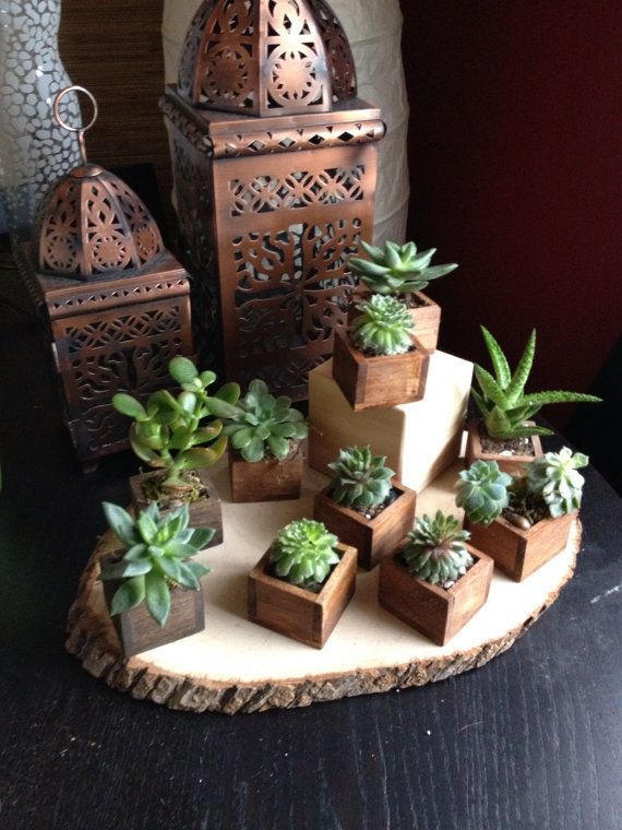 Succulents are awesome and the tiny wooden boxes make them fun and easy to rearrange.