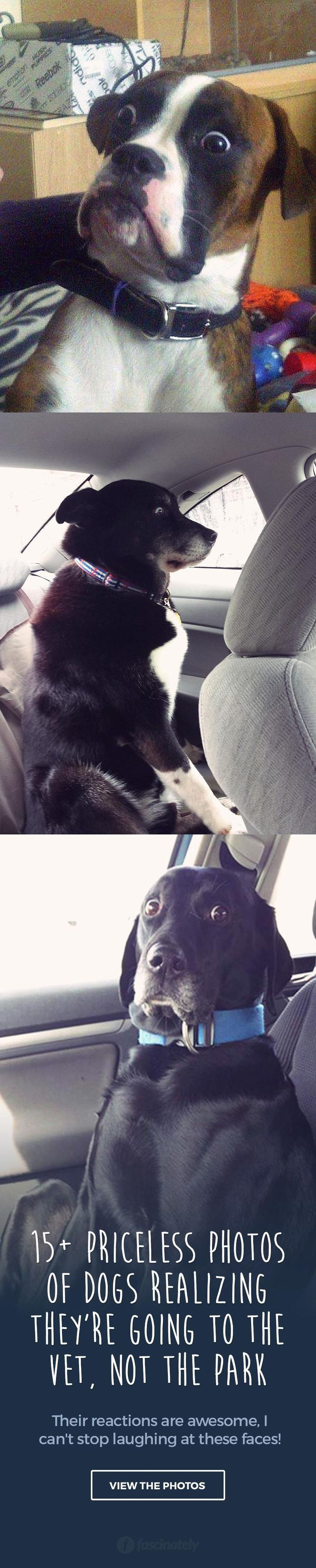 Best Funny Images On Pinterest Happiness Hilarious And - 15 times dogs realized they were going to the vet instead of the park their reactions are priceless