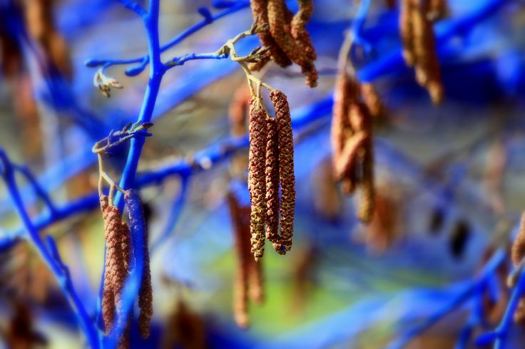 Konstantin Dimopoulos | The Blue Trees environmental art installation | City of Richmond, Canada | Photo: Clayton Perry
