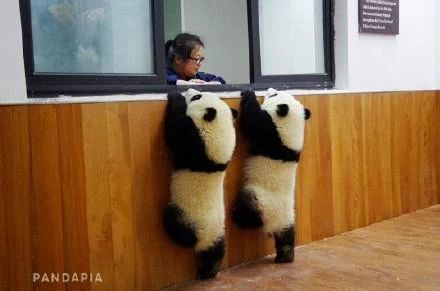 """Uh, yeah. We'd like to cash our King Fu Panda royalty cheques. Tens and twenties will be fine - thank you """