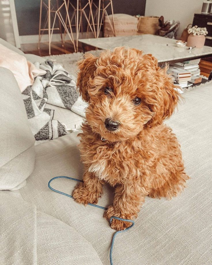 30 Exceptionally Smart Canine Breeds Fluffy Animals Cute Baby