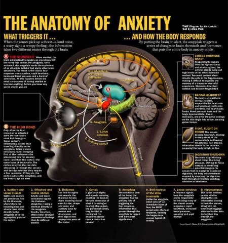 INFOGRAPHIC / The Anatomy of Anxiety