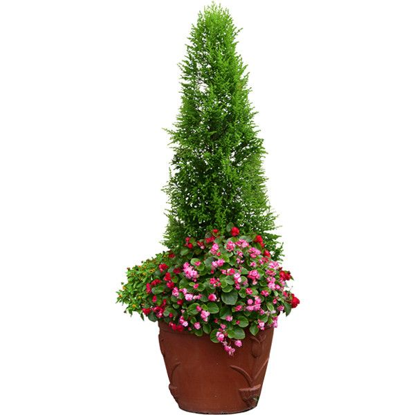 Landscape Items featuring polyvore, plants, flowers, potted plants, blooms and flowers & plants
