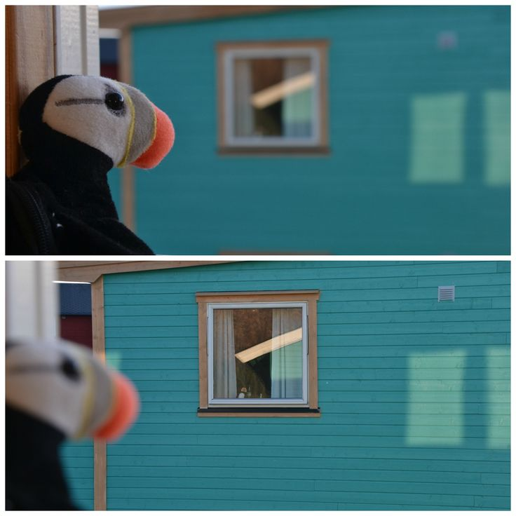 A lonely puffin.