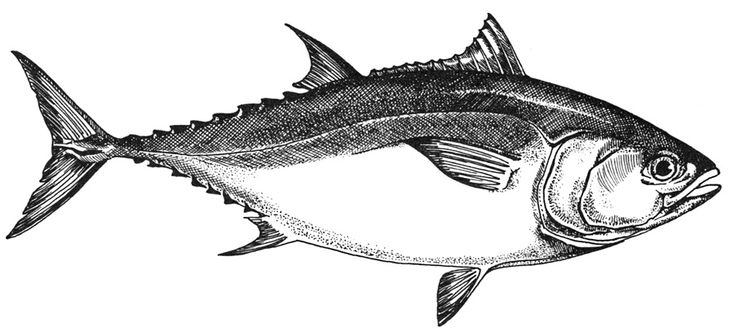 Environmental Group Files - Lawsuit Over Bluefin Tuna Fishing Policy | The Vineyard Gazette - Martha's Vineyard News