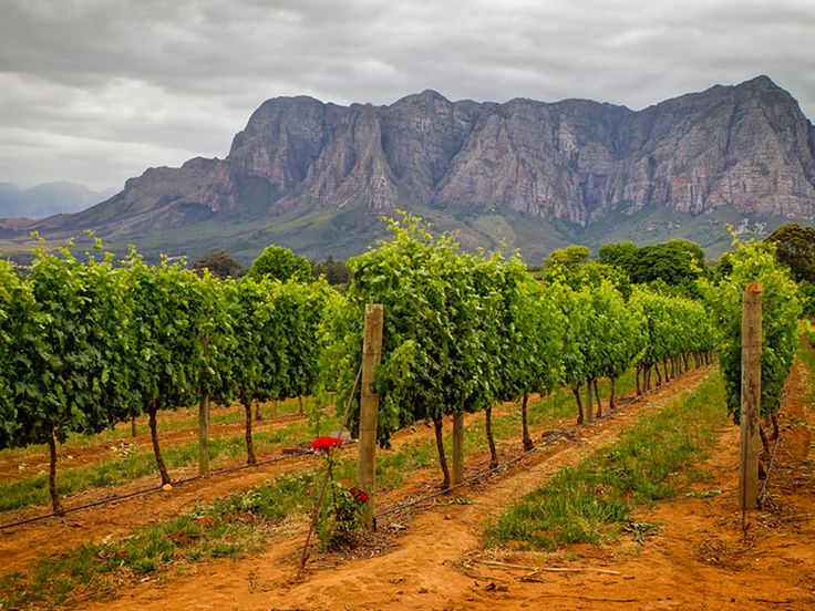 Take a tour of the wine vineyards at the Delaire Graff Estate, located in the Helshoogte Mountains.
