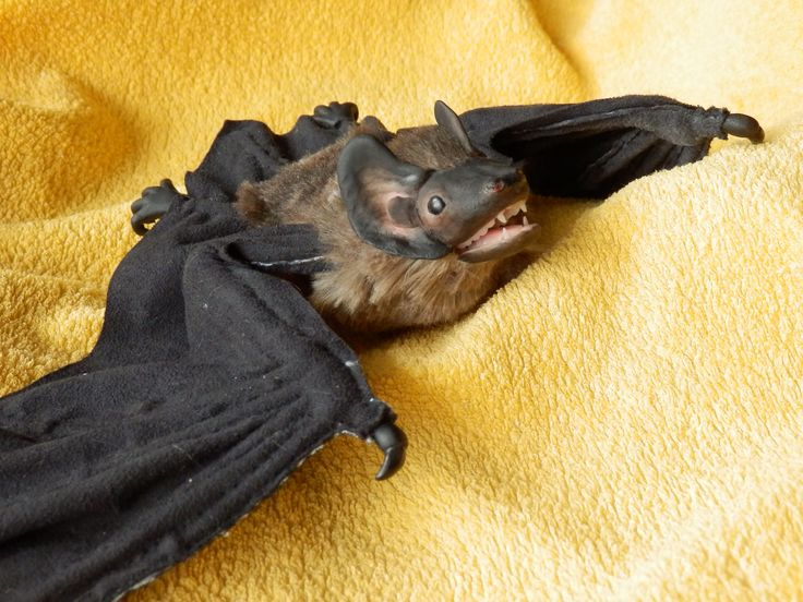 Real bat. Made by Juditheart