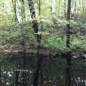 Whipple Hill Conservation Land, Lexington, MA