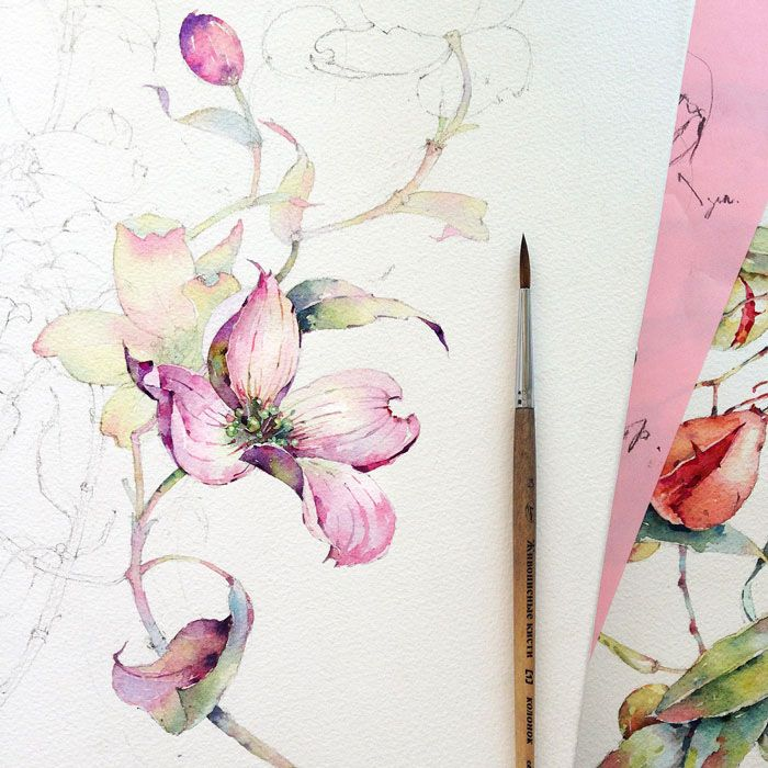 Dogwood in watercolor on Behance