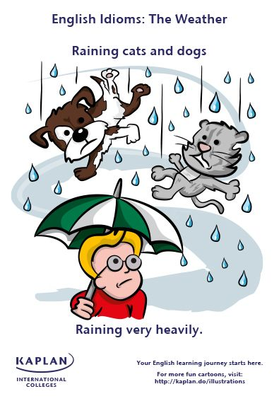 Raining Cats And Dogs Expression In Spanish