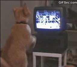 GIF: Boxing Cat - www.gifsec.com