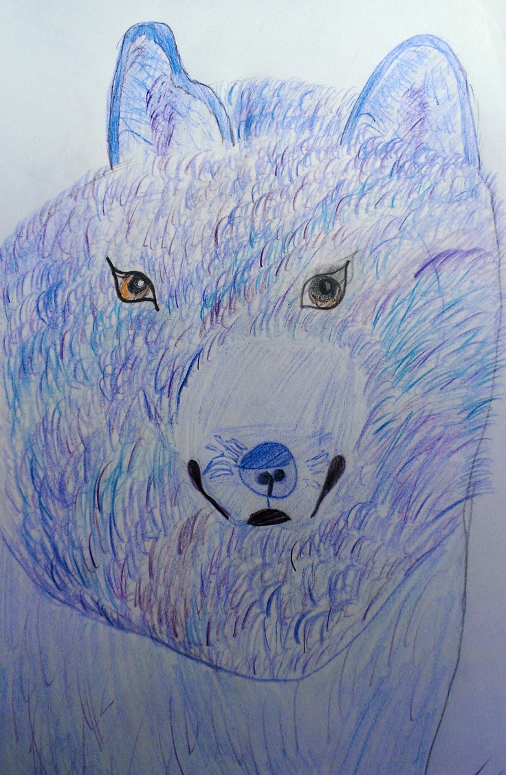 Zoe's take on Shogun, our Japanese Akita, who looks like a wolf. Coloured pencils