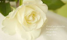 Latest White Rose Wallpaper HD Resolution #52F 1024 x 768 px 236.31 KB gothic purple pink animated 3