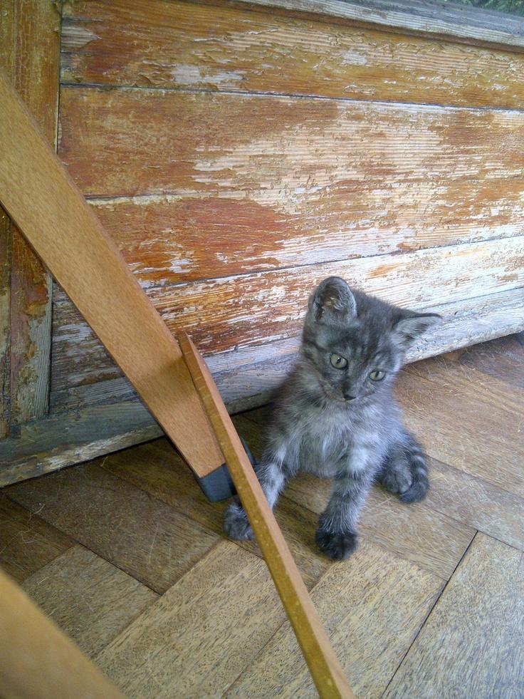 Artù, my third furry baby