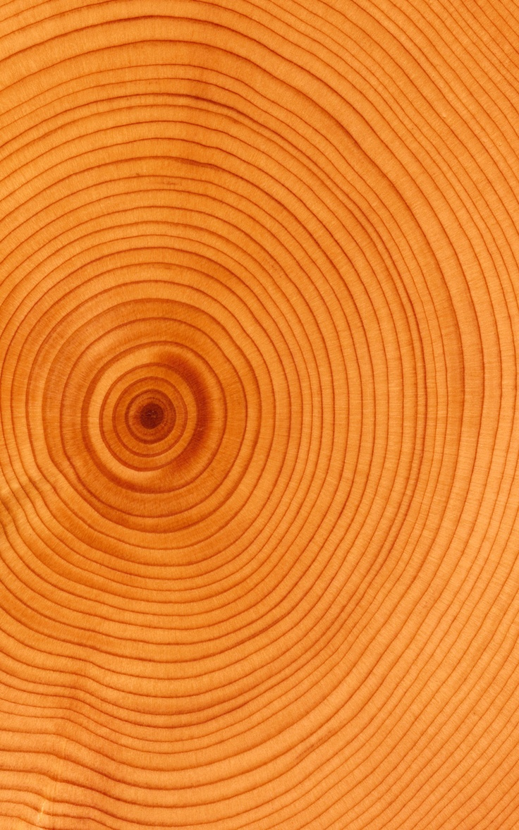 dating tree rings Carbon dating in many cases seriously embarrasses evolutionists by giving ages that are much younger than those expected from their model of tree ring dating.