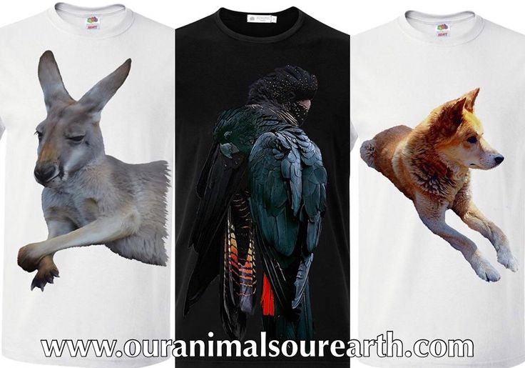 New tshirts, kangaroo, black cockatoo and the dingo, available soon from www.ouranimalsourearth.com