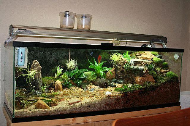 Paludarium, la symbiose aquacole! • Fishipedia, générateur en ligne de biotope aquatique