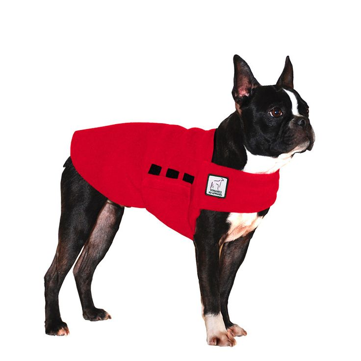 Red Boston Terrier Dog Tummy Warmer, great for warmth, anxiety and laying with our dog rain coat. High performance material. Made in the USA.