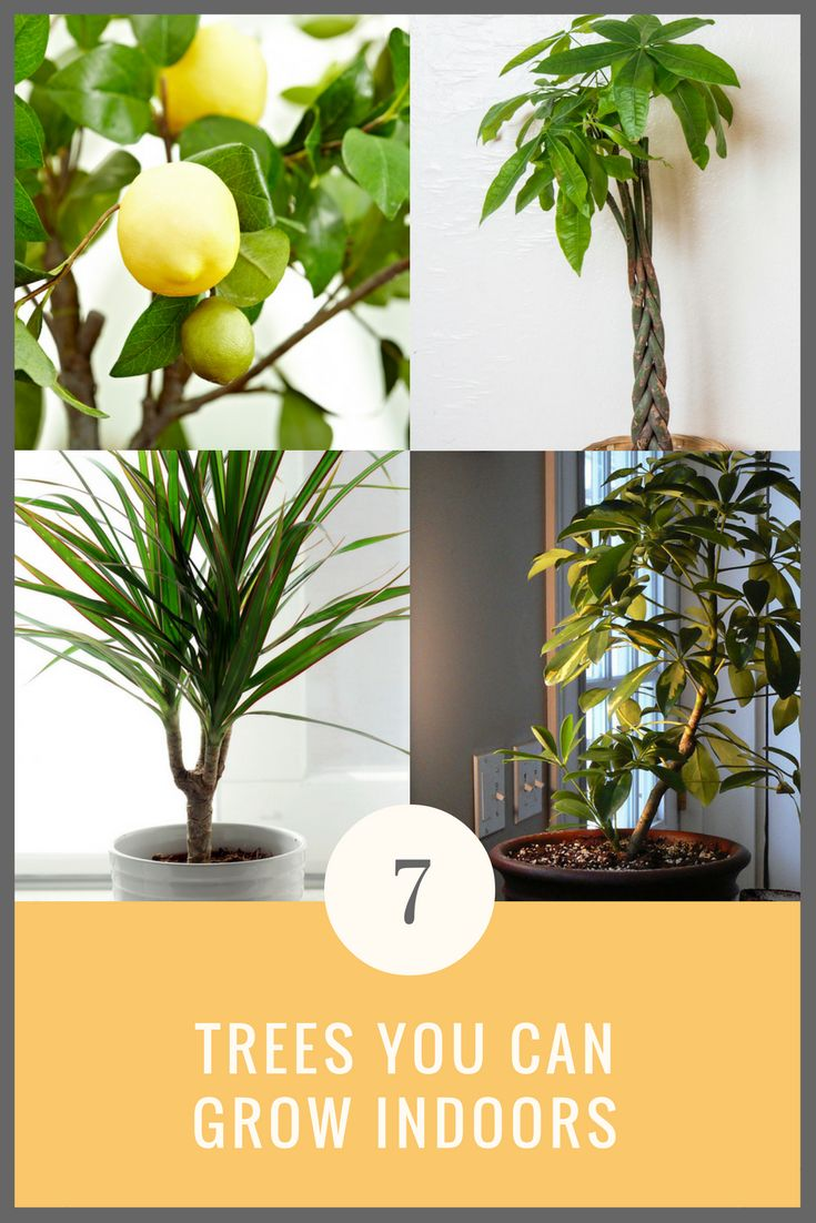282 best indoor gardening bob vila 39 s picks images on for What plants can i grow indoors