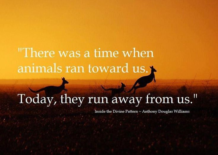 Animal Abuse Quotes Alluring Quotes About Animal Abuse