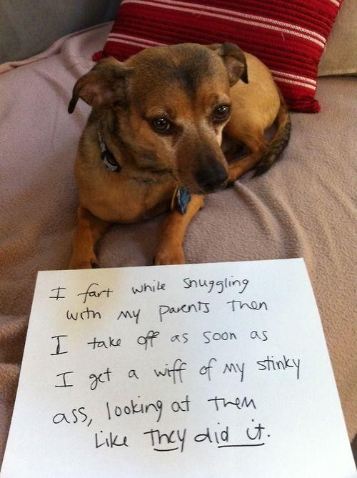 dog shaming: Animal Humor, Ass Stuff, Dogs Shaming, Funny Stuff, Doggies Shaming, Asshat Dogs, Animal Shaming, Pet Shaming, Animal Dogs