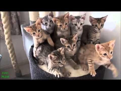 Legviccesebb állat videók gyűjteménye! 2014 HD - YouTube