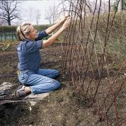 Create a diamond-patterned twig trellis for pea vines to scramble up. In front of a line of thick supporting sticks, sink thin shoots at about a 60-degree angle, a few inches apart and parallel to one another. Repeat at the same angle in the opposite direction so that shoots crisscross. Lash the shoots together with twine where they intersect. For the full step-by-step, see How to Build a Diamond-Pattern Twig Trellis.No cost