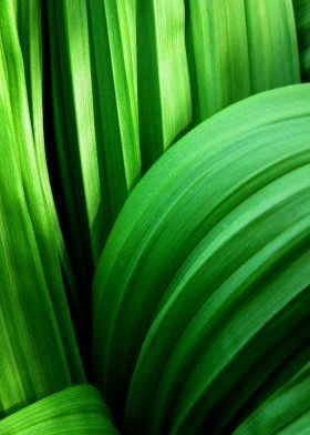 prints on metal Other leaves abstract nature foliage green flora