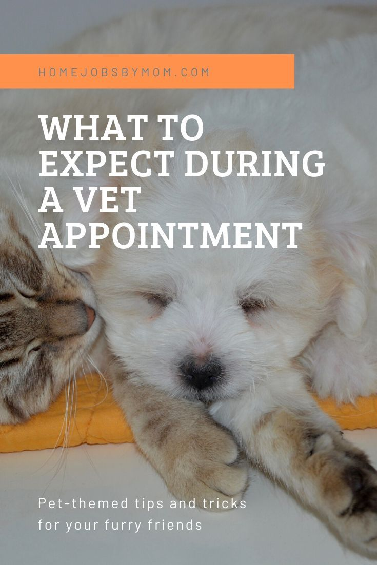 What To Expect During A Vet Appointment In 2020 Vets Pets Furry Friend