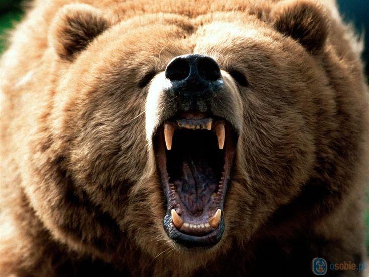 Monday morning yawn!