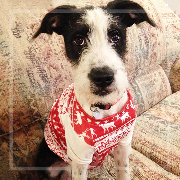 Happy National Mutt Day! Show us the mutt in your life! #muttsofinstagram #puppylove