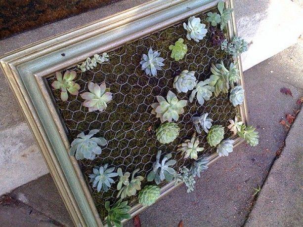 how to make a vertical framed succulent gardenVertical Succulents Gardens, Diy Tutorials, Vintage Frames, Old Frames, Hanging Succulents, Hanging Frames, Pictures Frames, Wall Gardens, Hanging Gardens