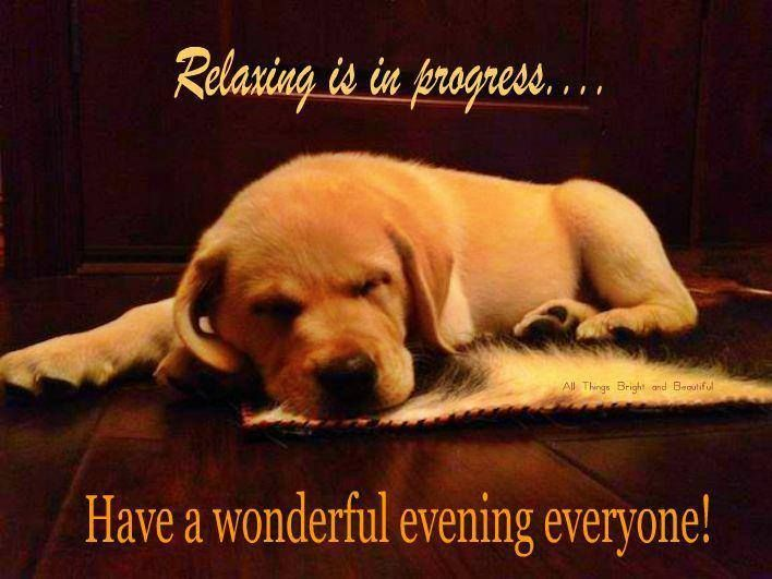 Image result for good night dog quotes