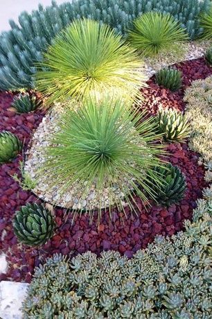 Best 25+ Succulent landscaping ideas only on Pinterest ... - how to design a succulent garden