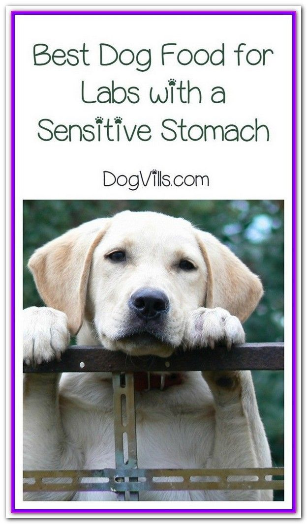 Lab Sensitive Stomach Dog Food Best Purina Pro Plan Focus