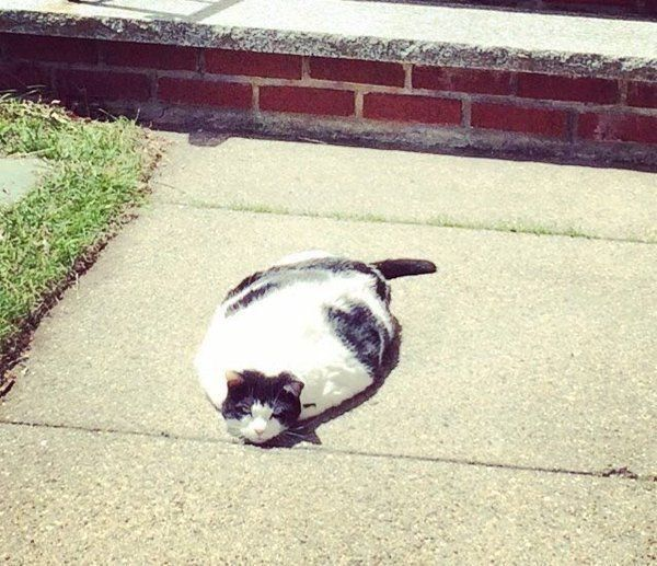 Du weißt, dass es heiß ist, wenn deine Katze schmilzt | Webfail - Fail Bilder und Fail Videos
