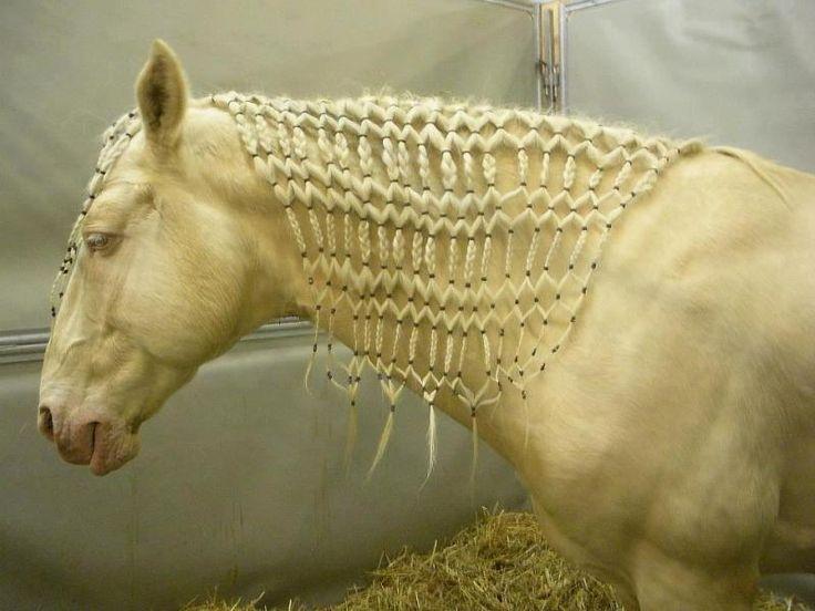 The 25 Best Horse Mane Braids Ideas On Pinterest Horse