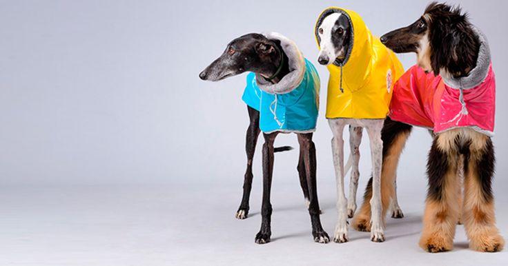 Abrigos, sudaderas y chubasqueros para galgos y podencos. La marca trendy y solidaria para perros con estilo.