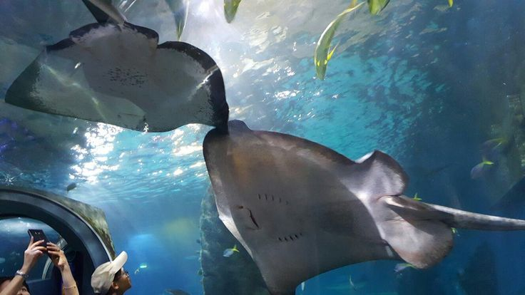 Sea Life Melbourne Aquarium (Australia): Top Tips Before You Go - TripAdvisor