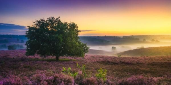 12 schitterende foto's die laten zien hoe mooi Nederland is