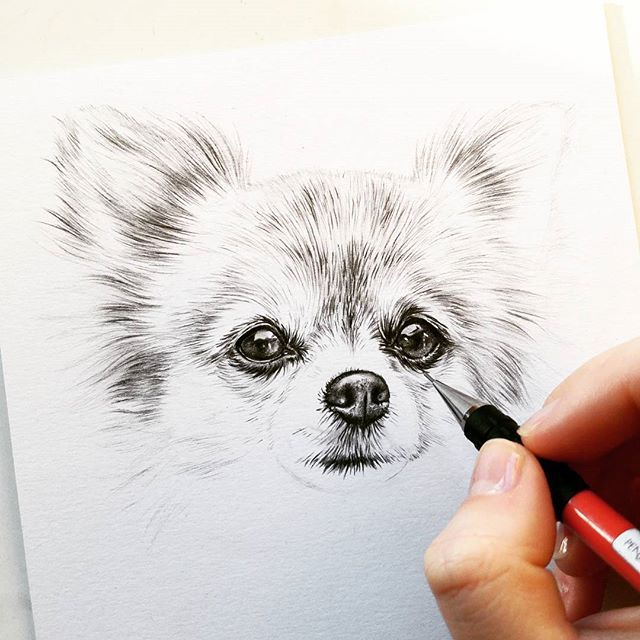 Christmas commission stress is almost over yaayy! I need a vacation😂 here's some progress on Tica the #chihuahua . also, i just uploaded a long 'pastel drawing tutorial for beginners' video on youtube! Go have a look if you want to learn my way of working with pastels😁(link in bio)    #dog #workinprogress #instadog #dogstagram #dogsofinstagram #cute #graphite #pencil #drawing #instaart #dailyarts #instadaily #dogs #hond #pets #petsofinstagram