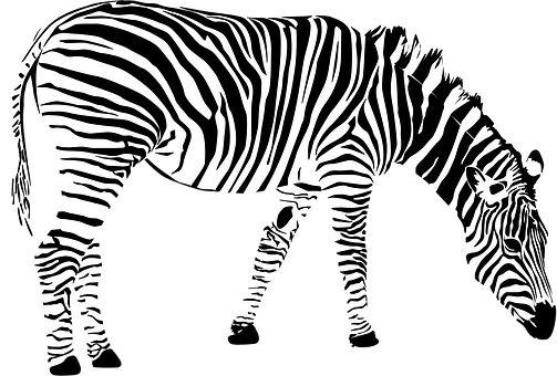 Zebra, Afryka, Zwierząt