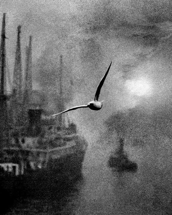 "1940s Billy Brandt "" Gull other the Thames """