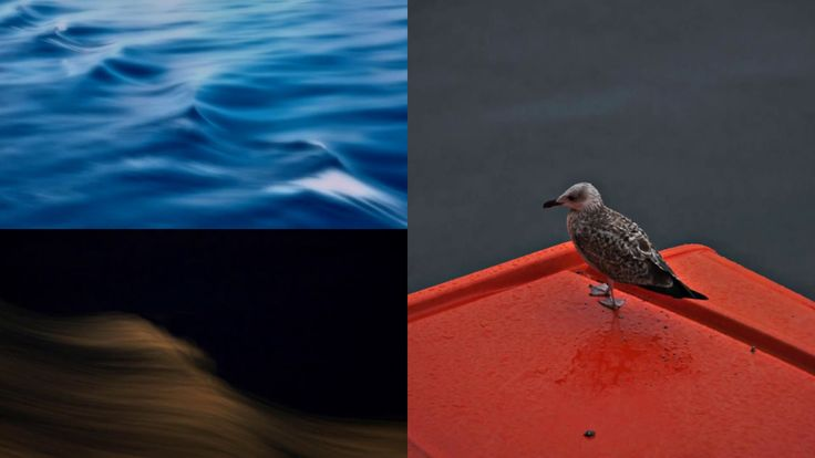 Cendrine Marrouat Photography: Images from the Sea
