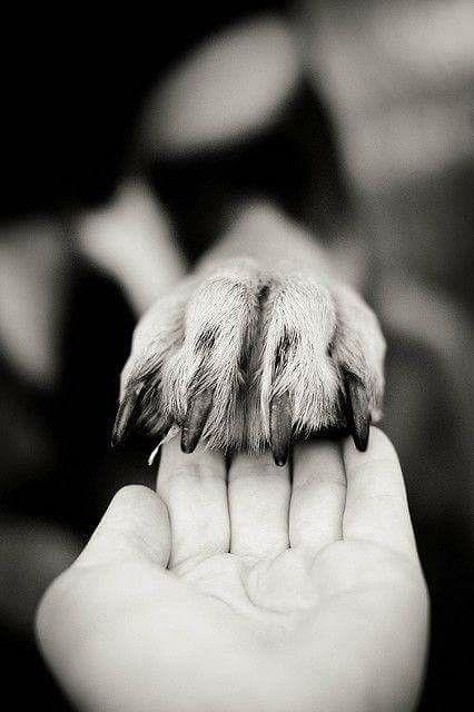 La pata del perro a la mano.  79c1be95d3b
